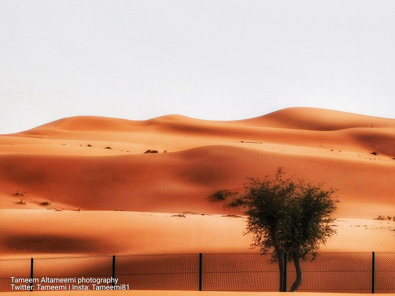 صورة من صحراء بلادي